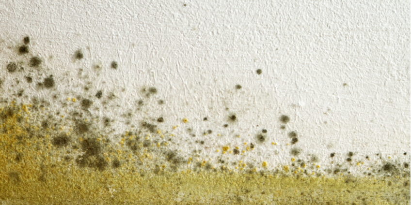 The Toxic Mold & Candida Connection