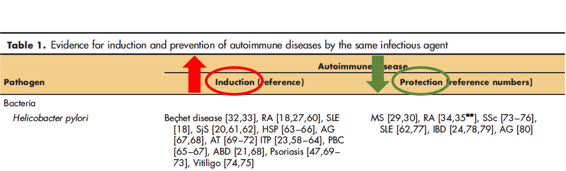 H. Pylori Induction and Protection for Autoimmune Disease